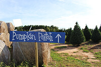 Pumpkin Patch Sign with Christmas Trees in background